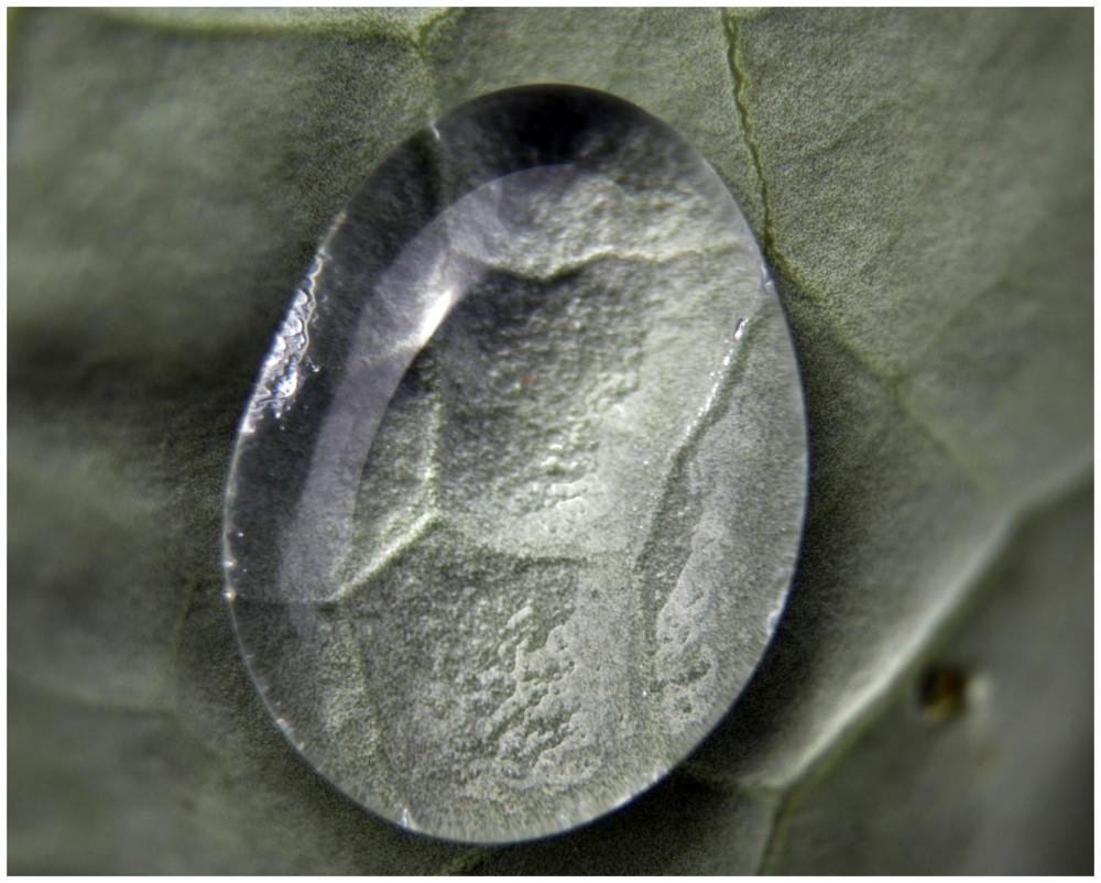 Water Drop on Broccoli Leaf