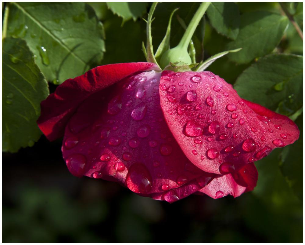 When It Rains, Photograph Raindrops