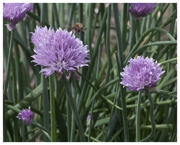 Bee Chive