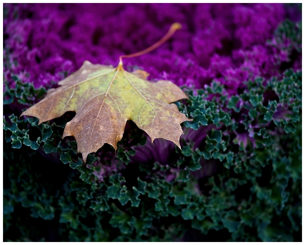 Leaf On Kale