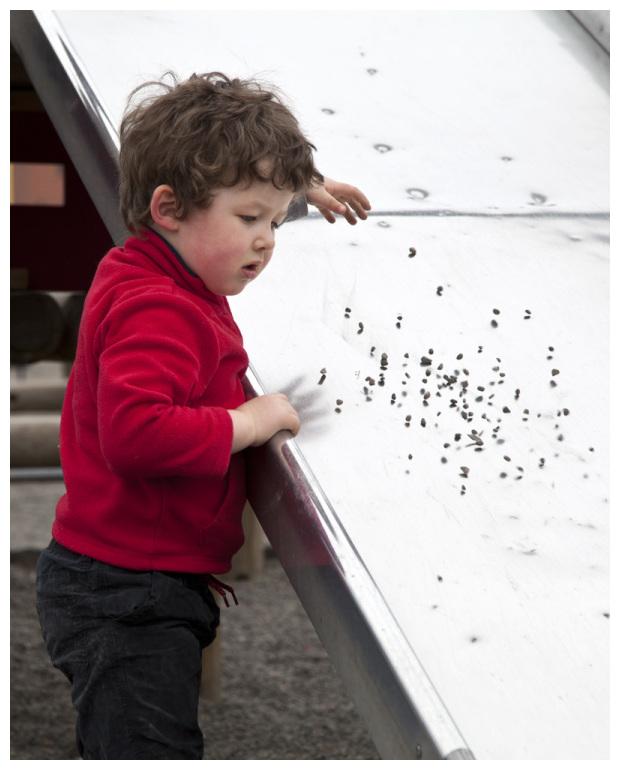 Bouncing Pebbles