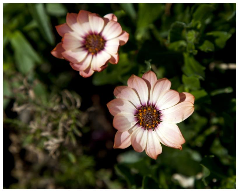 The Joy Of Living In A Garden