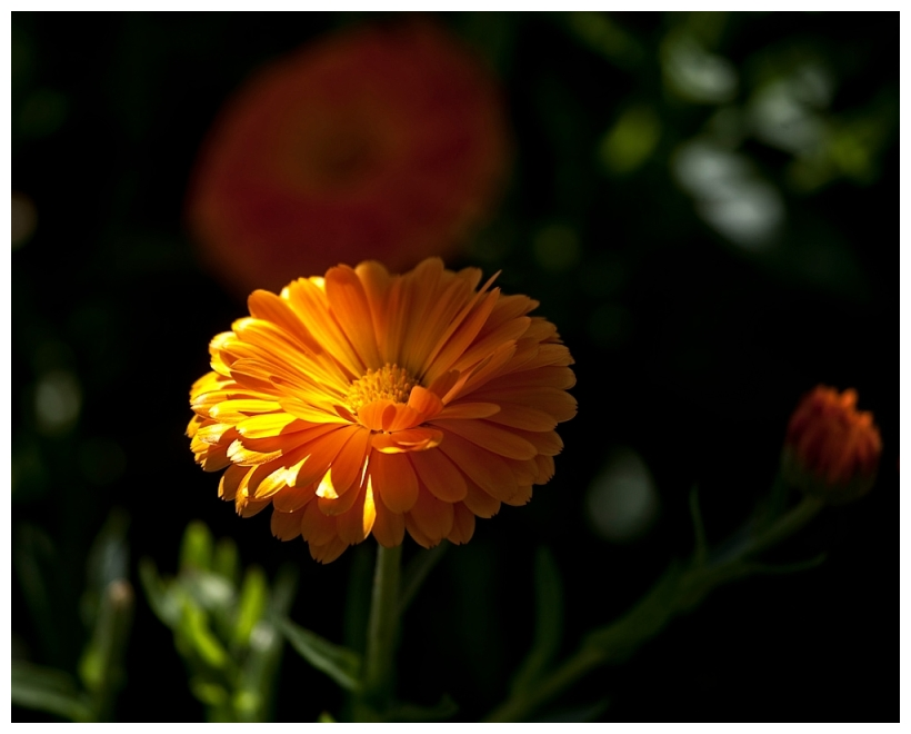 A NArrow Beam of Sunlight
