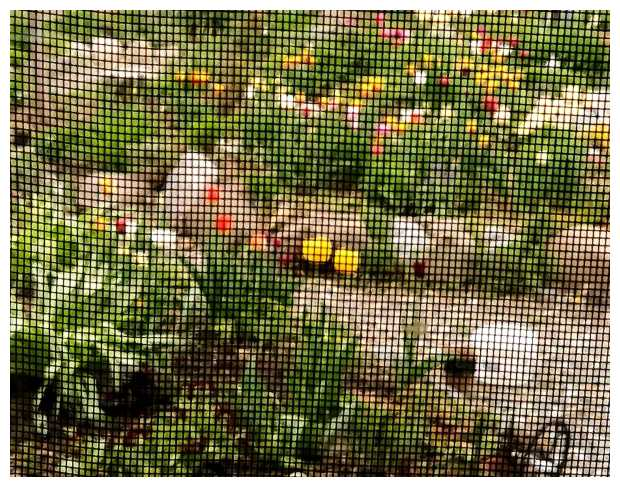 Window Screen Photography