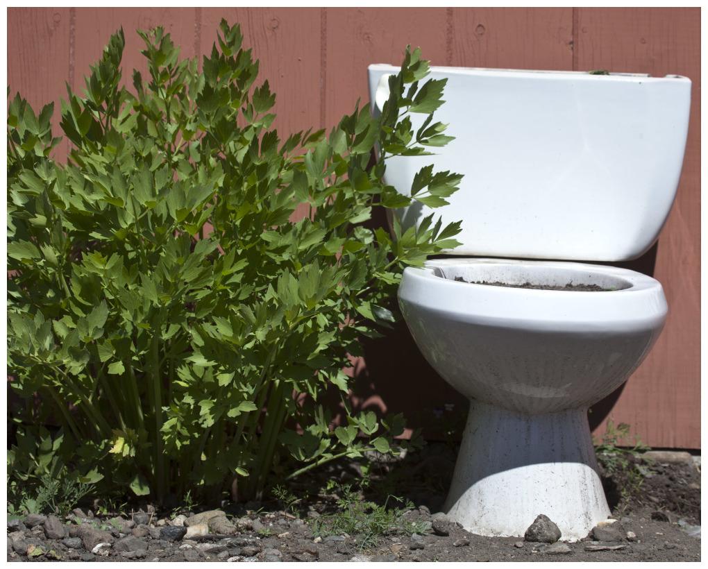 Old Toilet Planter