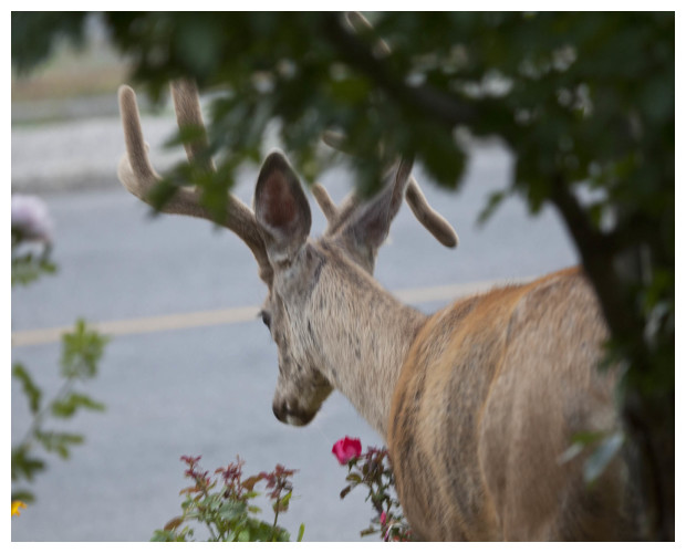 Snacking On One Of Our Roses