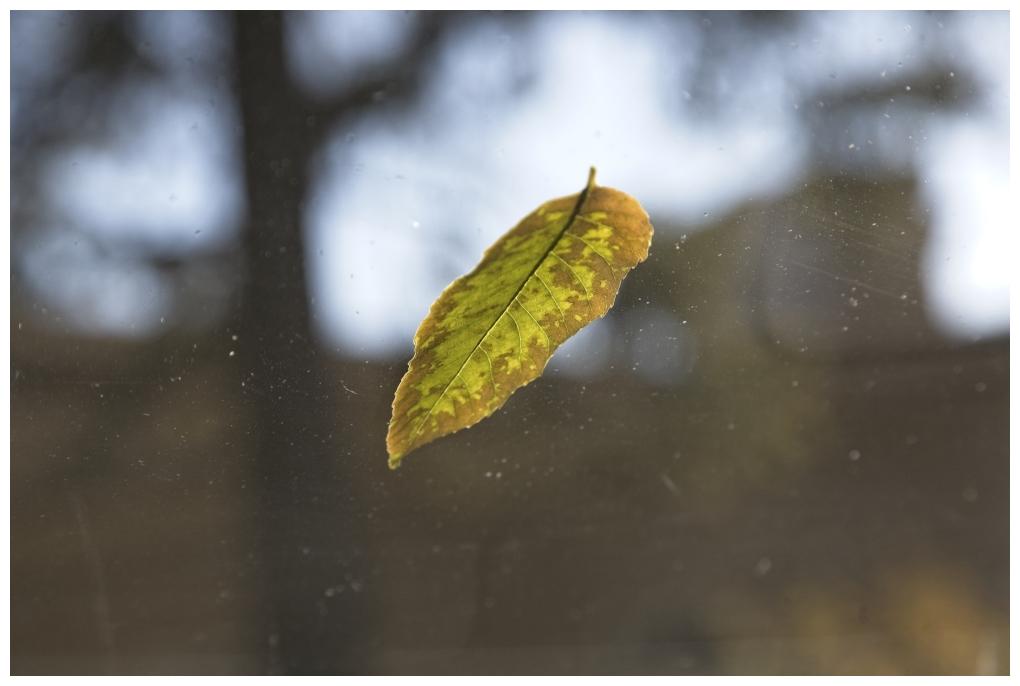 Leaf On Glass