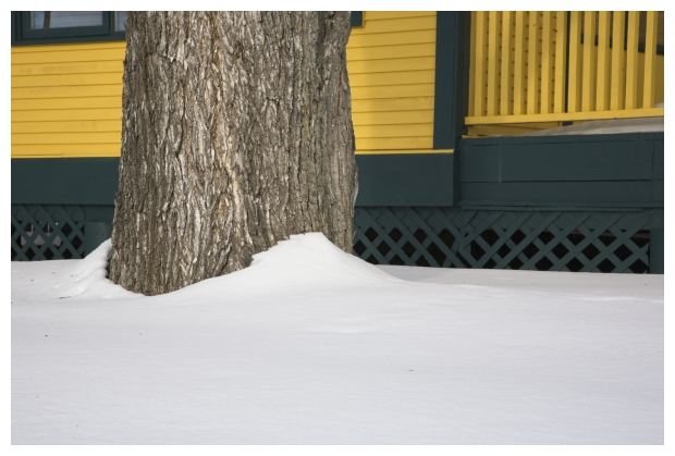 Trunk In Snow