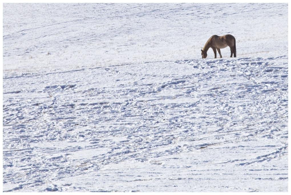 Grass Under The Snow