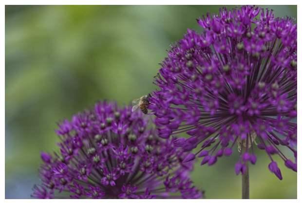A Beesy Day