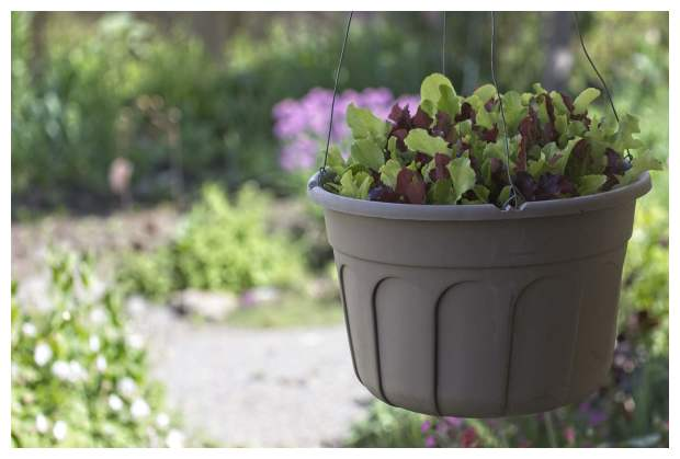 Hanging Pot of Salad Greens