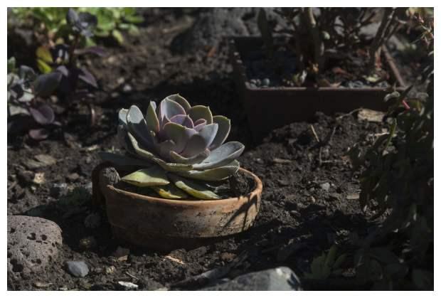 In The Garden of Delights.