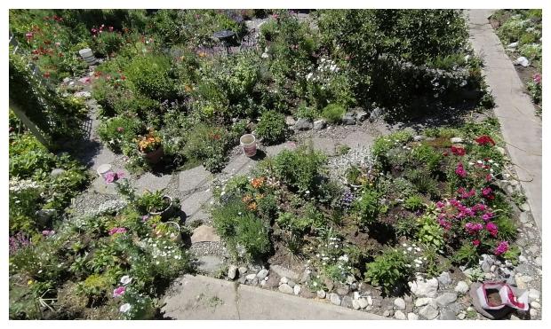A Bit of the Back Garden