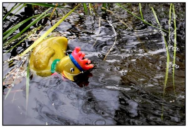 fallen king duck water crown toy lakeside