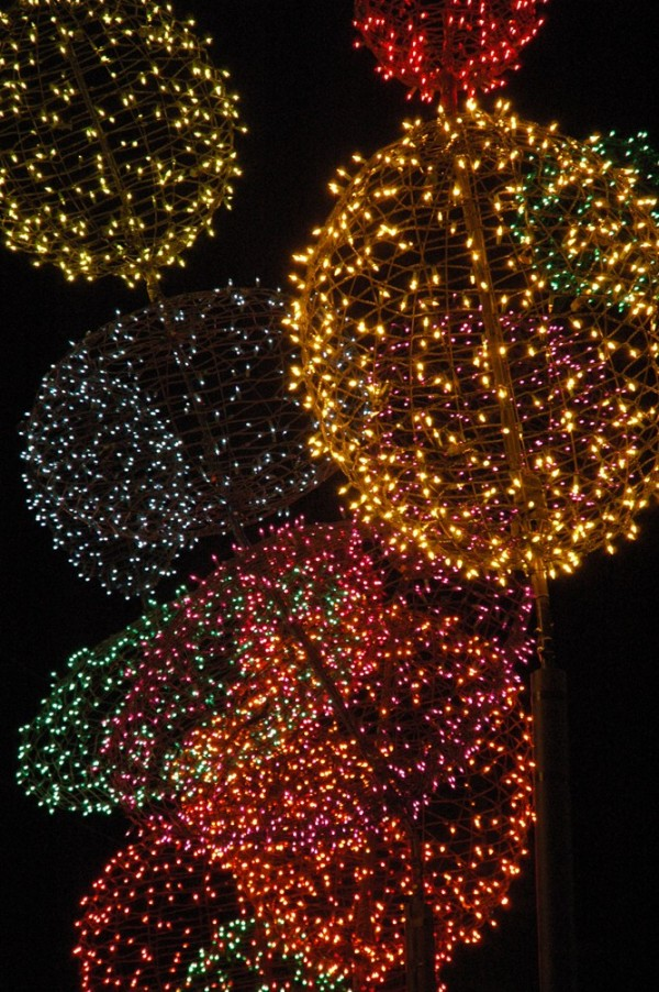 Colored lights decorating the streets in Portland