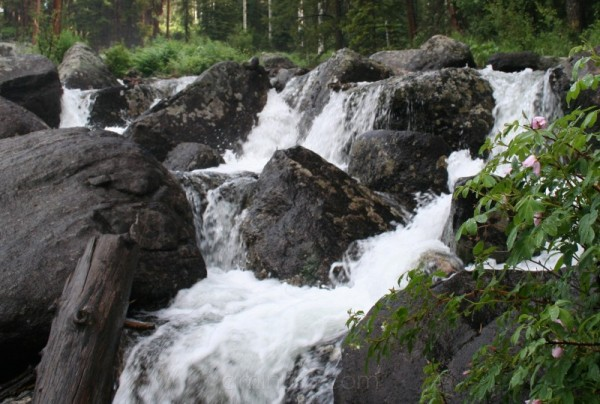 Waterfall - Flowers