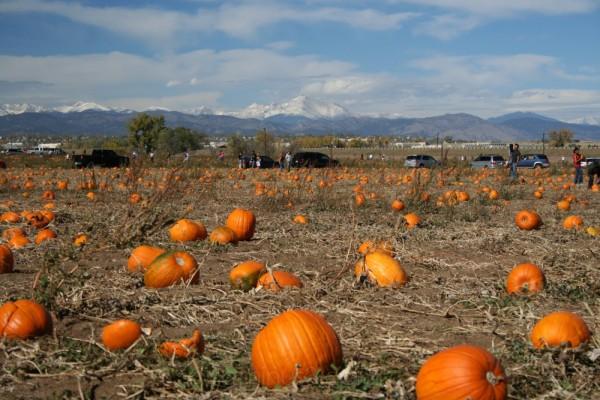 More Pumpkin Patch Fun
