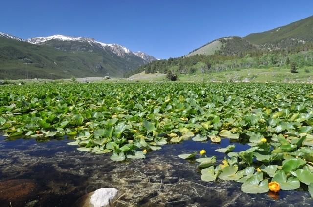 Lake West Rosebud
