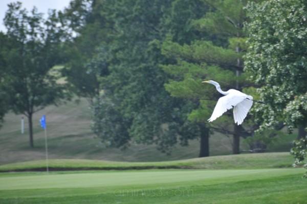 Eagle or Birdie?