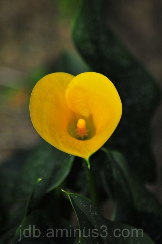 Isolated flower in soft focus