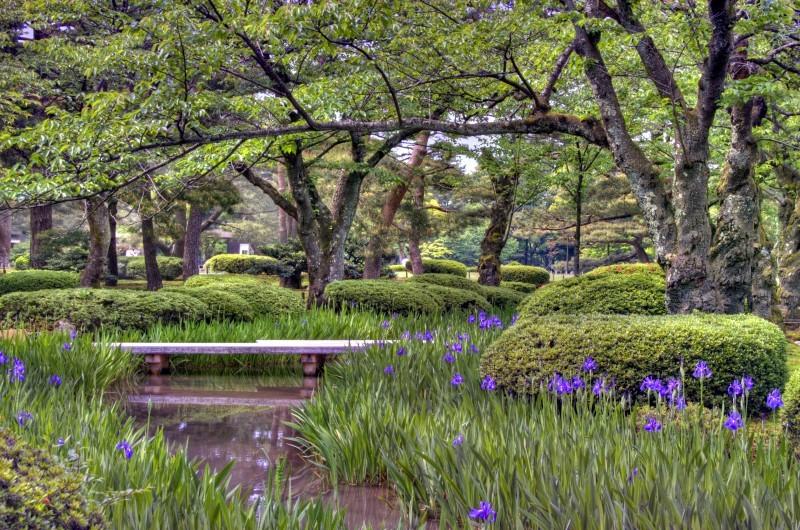 An HDR view of Iris in Kenrokuen.