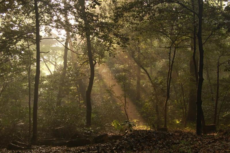 The forest at Meiji Jingu in Tokyo.