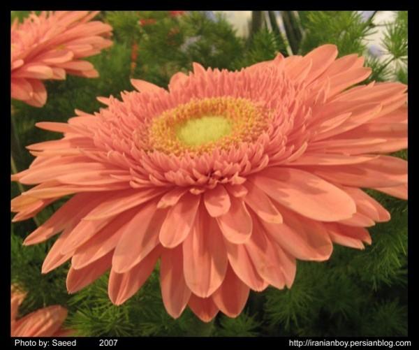 Flower In The Exhibitation
