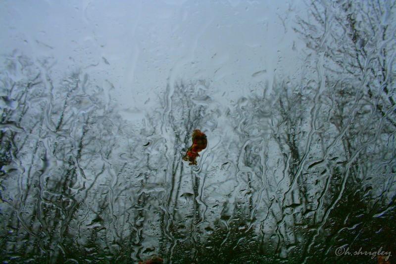 Flower Petal on Rainy Car Windshield