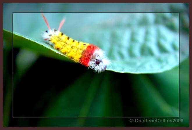 Shaky caterpillar