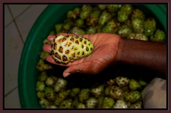 Noni miracle fruit anti oxidant