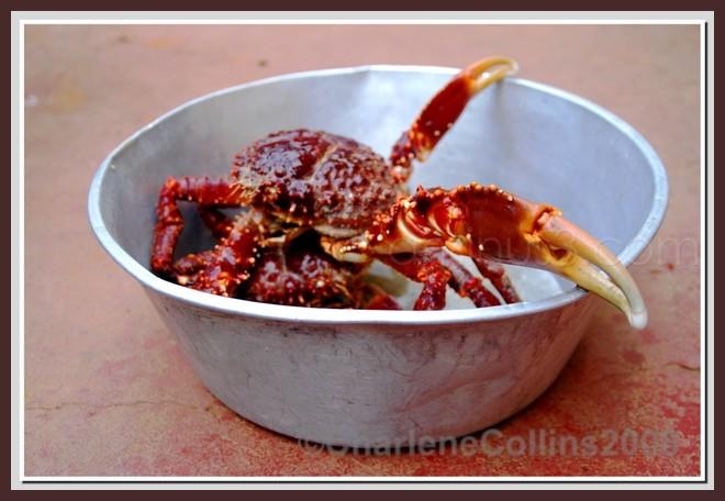 food crabs fresh Jamaica