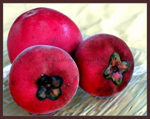 Velvet Apple Jamaica exotic