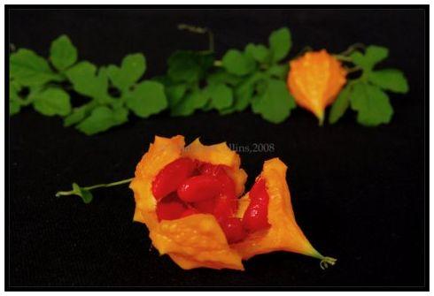 Jamaica Herb weed cerassee