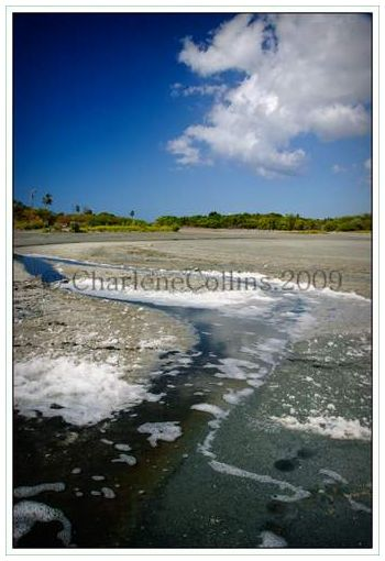 Jamaica Drift wood St Thomas Salt Ponds