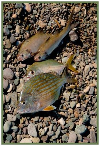 Jamaica beach sea fish food