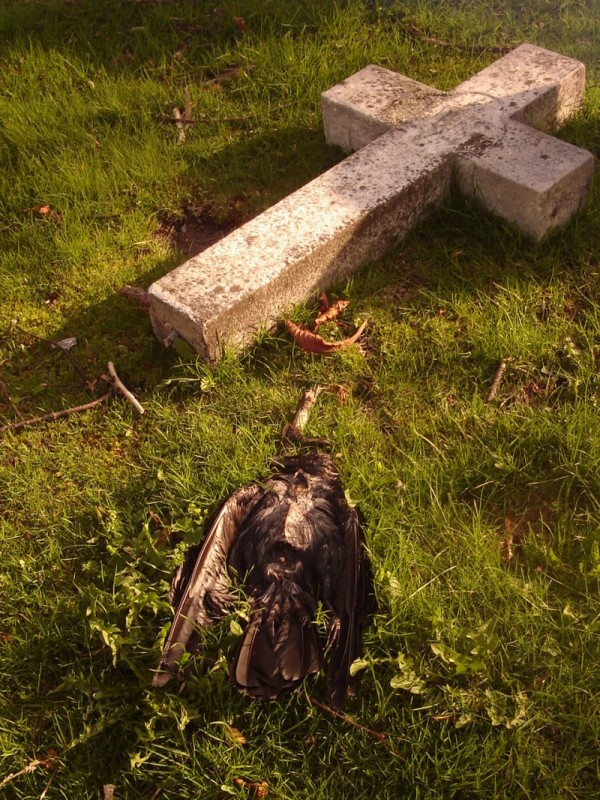 Forgotten ... gravestones #7