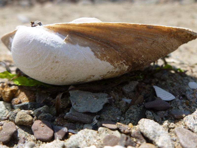 Seashore Platter