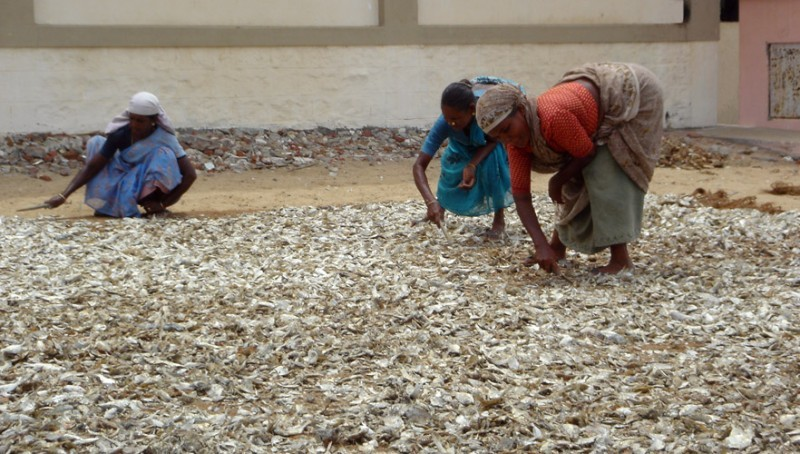 these women make dry fish on the ground