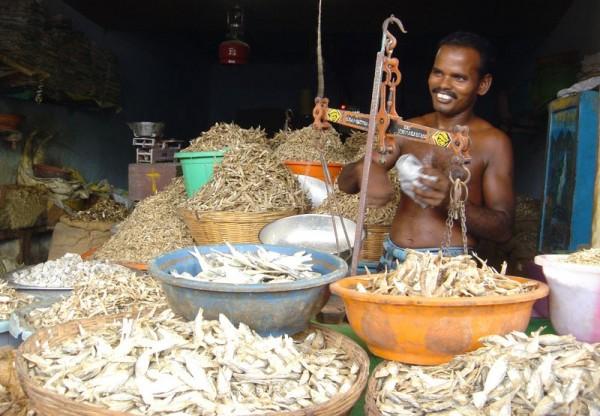 dry fish market, India