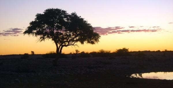 an evening in Africa