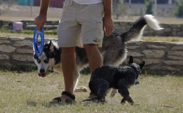 Dogs play at the Town Lake dog park
