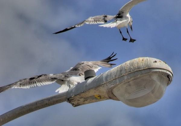 Sea gulls and pier light, Palacious, Texas