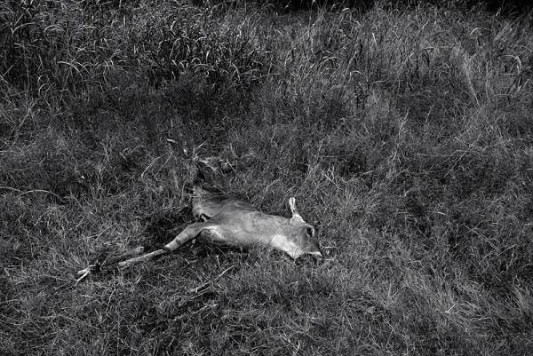 Dead deer found along road