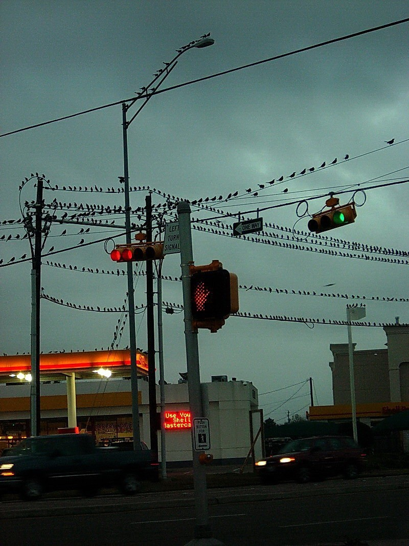 Birds rest on wires and signs at intersection