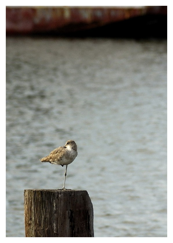 One legged bird at Port Lavaca