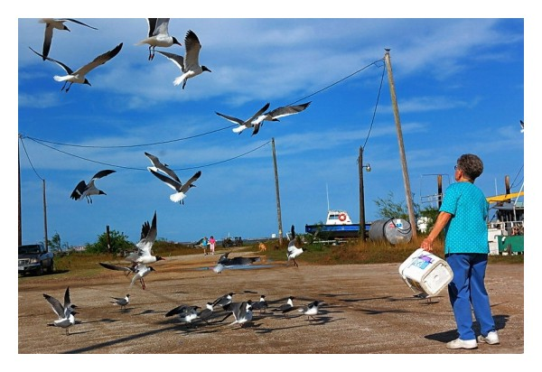 Feeding sea gulls in Port Lavaca