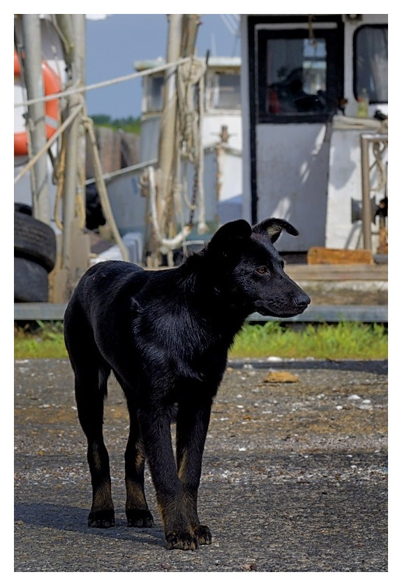 Black puppy, timid and alone, Seadrift, Texas