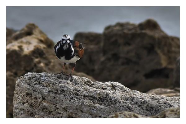 Bird on a rock, Seadrift, Texas
