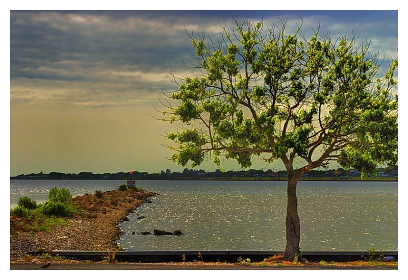 Earth jetty and tree, Seadrift, Texas