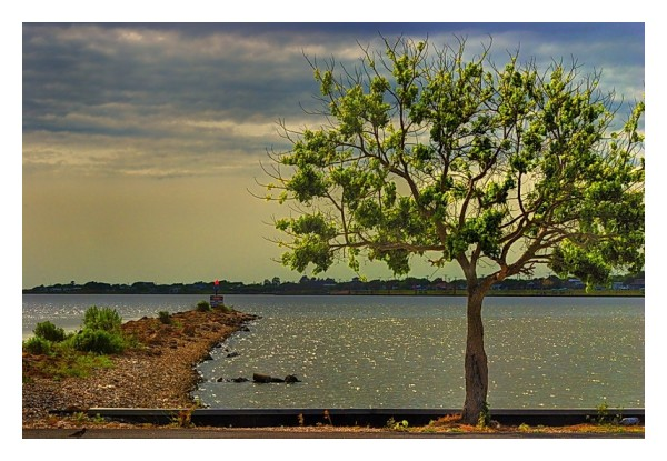 Earth jetty and tree, Seadrift, Texas